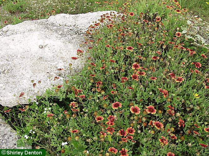 Florida native plant society plantrealflorida mightylinksfo