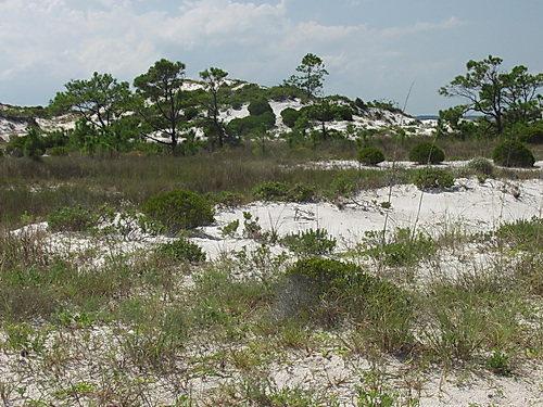 resources/native-plant-communities/active_dunes_st_george.jpg