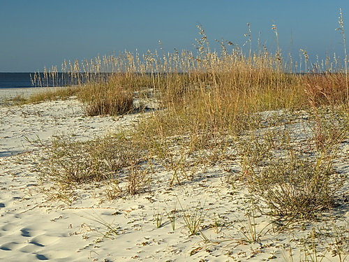 resources/native-plant-communities/dune_SalinasPark_StJoePen.jpg