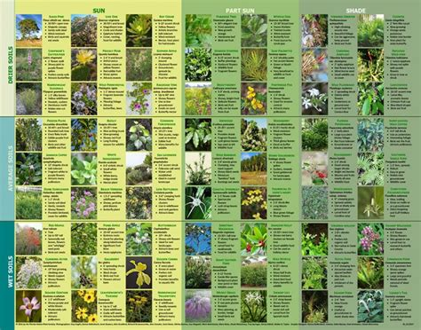 what-we-do/native-plant-poster.jpg
